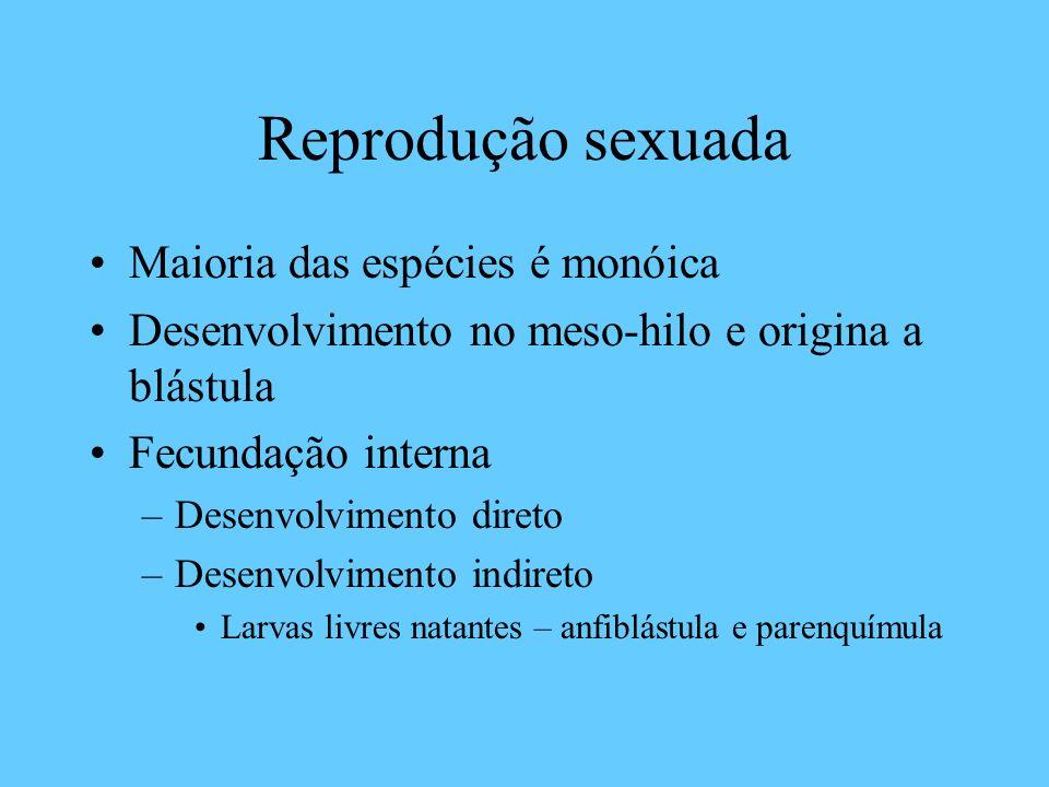 Reprodução sexuada Maioria das espécies é monóica
