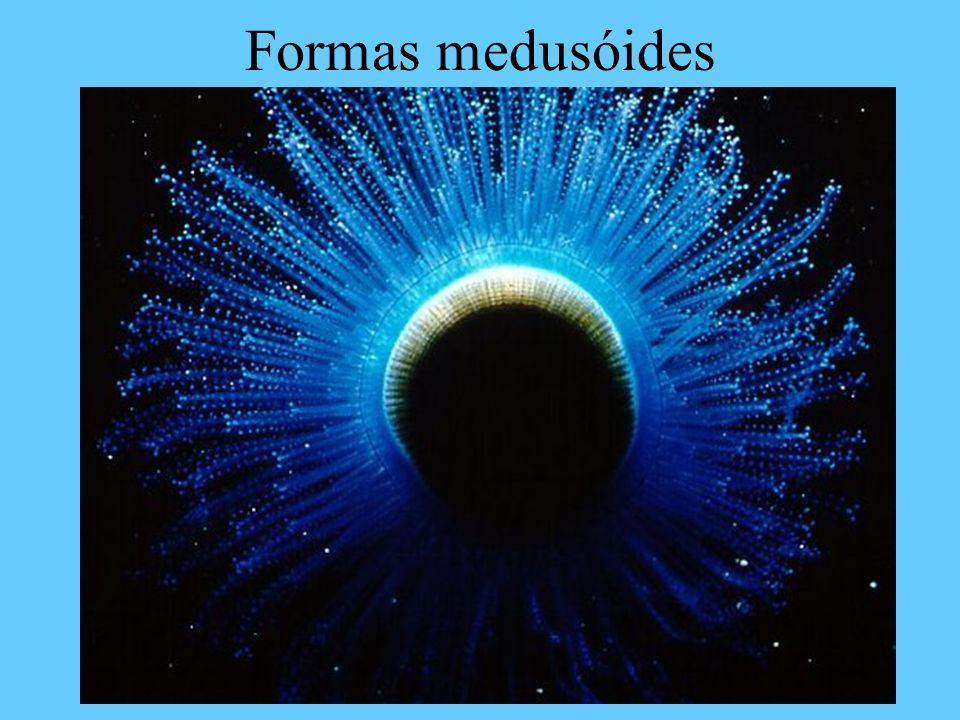 Formas medusóides