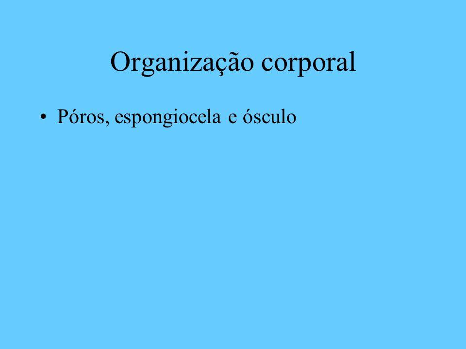 Organização corporal Póros, espongiocela e ósculo