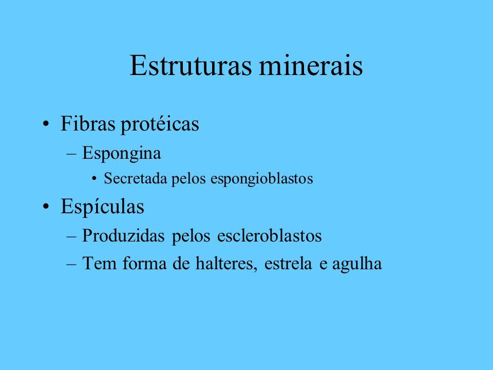 Estruturas minerais Fibras protéicas Espículas Espongina