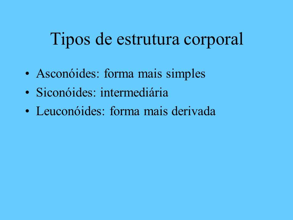 Tipos de estrutura corporal