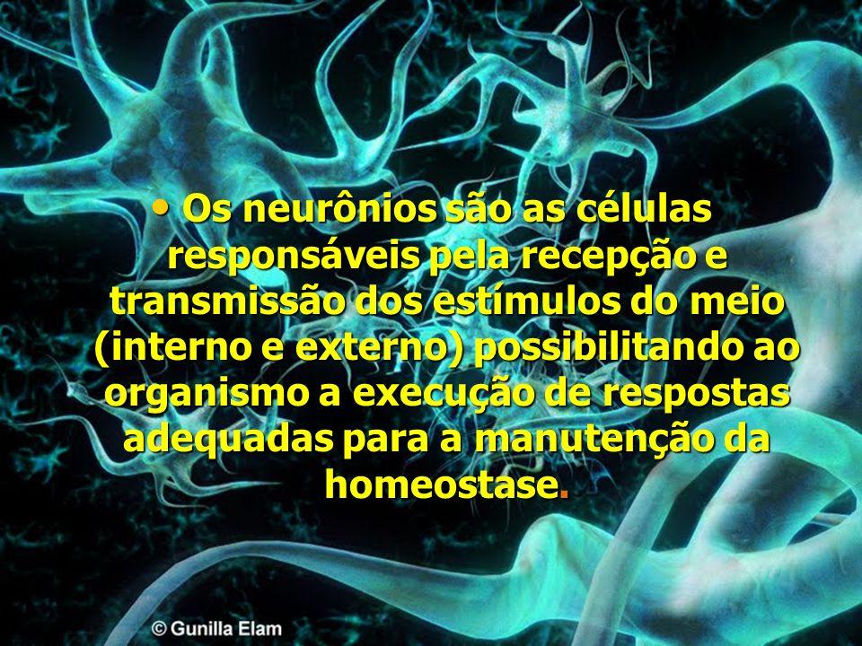 Os neurônios são as células responsáveis pela recepção e transmissão dos estímulos do meio (interno e externo) possibilitando ao organismo a execução de respostas adequadas para a manutenção da homeostase.