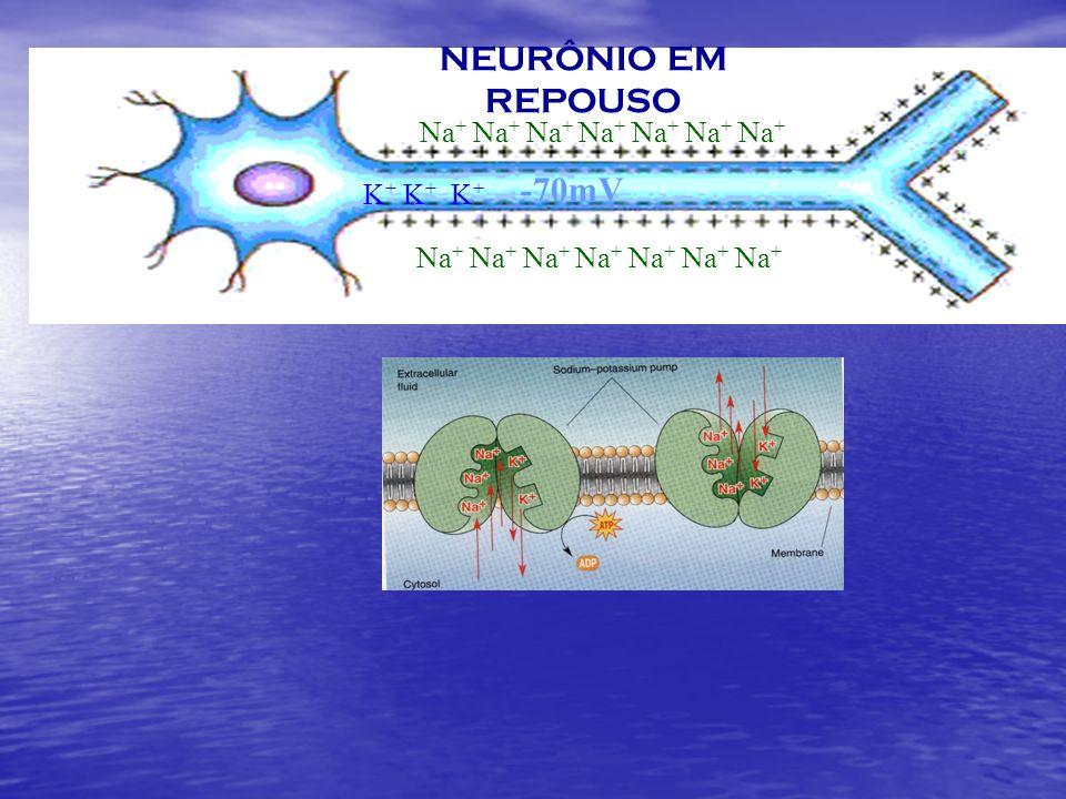 NEURÔNIO EM REPOUSO -70mV Na+ Na+ Na+ Na+ Na+ Na+ Na+ K+ K+ K+