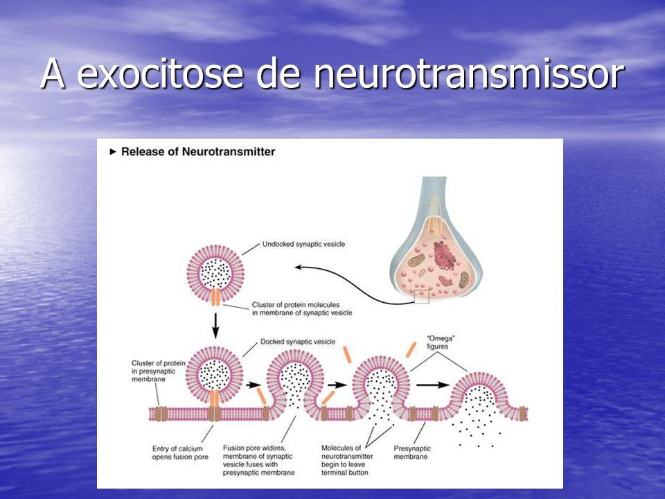 A exocitose de neurotransmissor