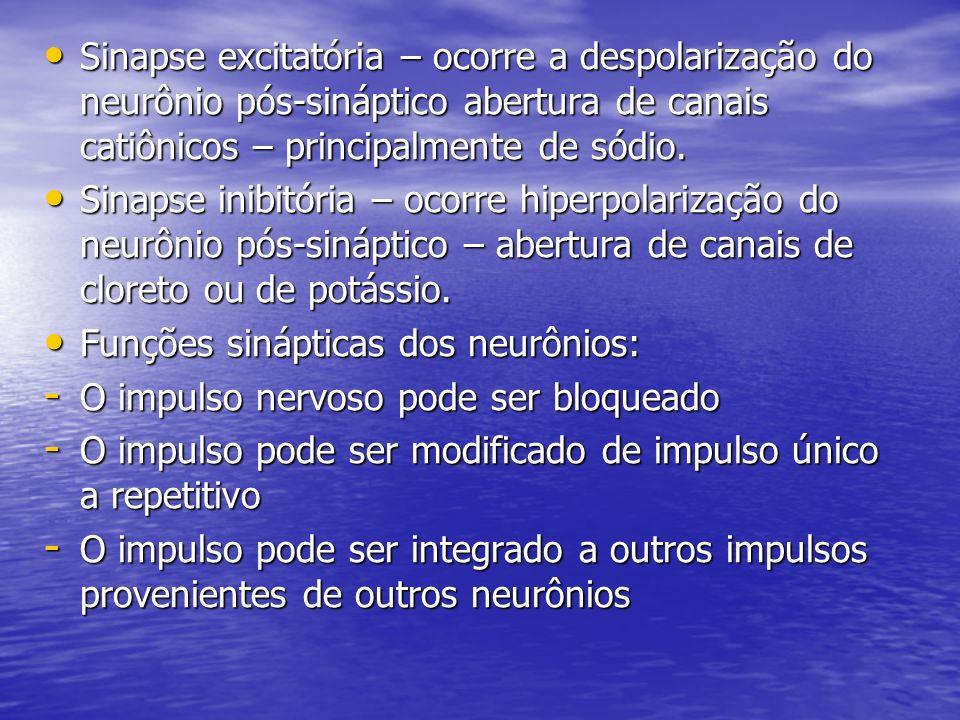 Sinapse excitatória – ocorre a despolarização do neurônio pós-sináptico abertura de canais catiônicos – principalmente de sódio.