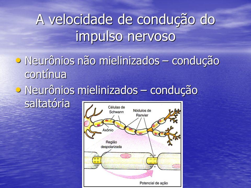 A velocidade de condução do impulso nervoso