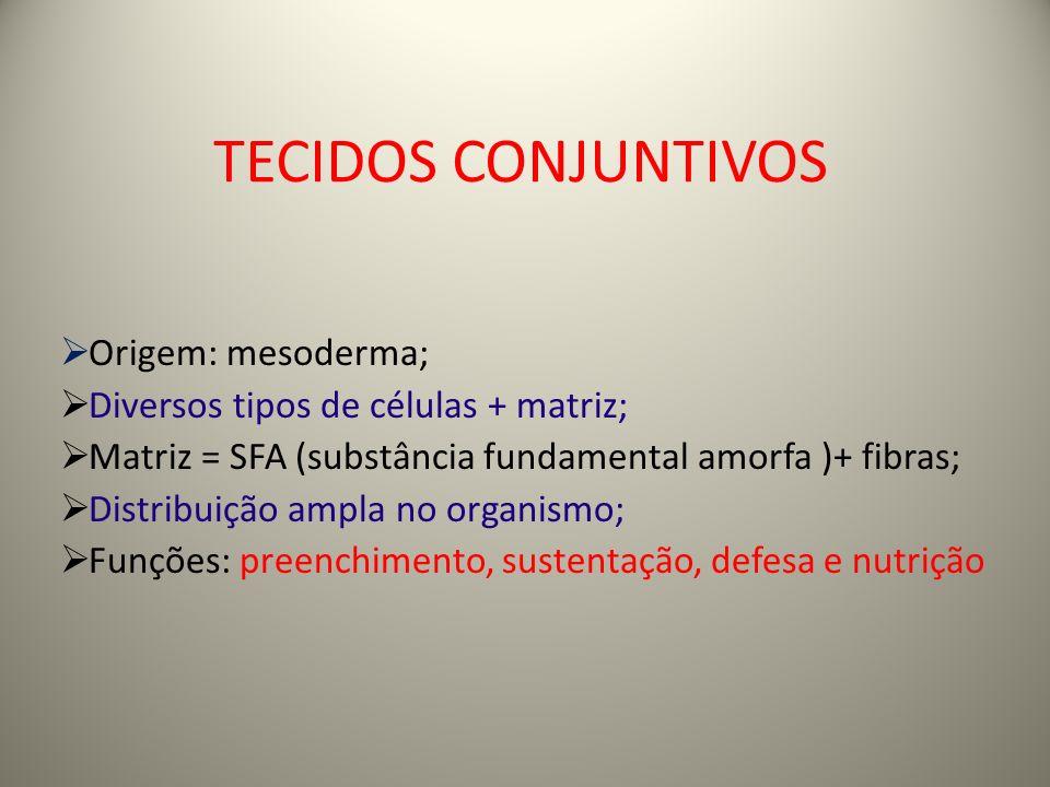 TECIDOS CONJUNTIVOS Origem: mesoderma;