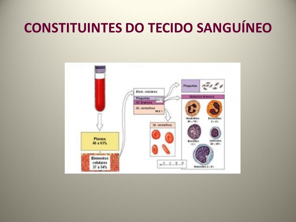 CONSTITUINTES DO TECIDO SANGUÍNEO