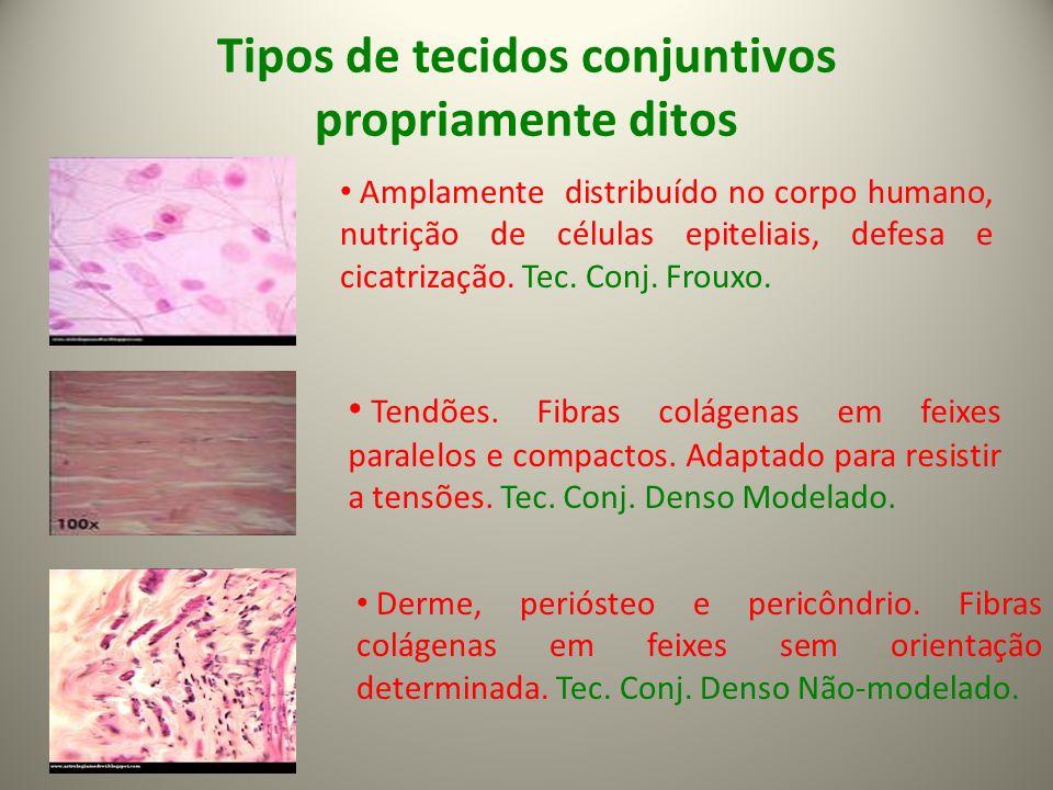 Tipos de tecidos conjuntivos propriamente ditos