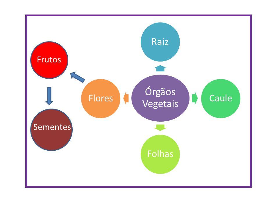 Órgãos Vegetais Raiz Caule Folhas Flores Frutos Sementes
