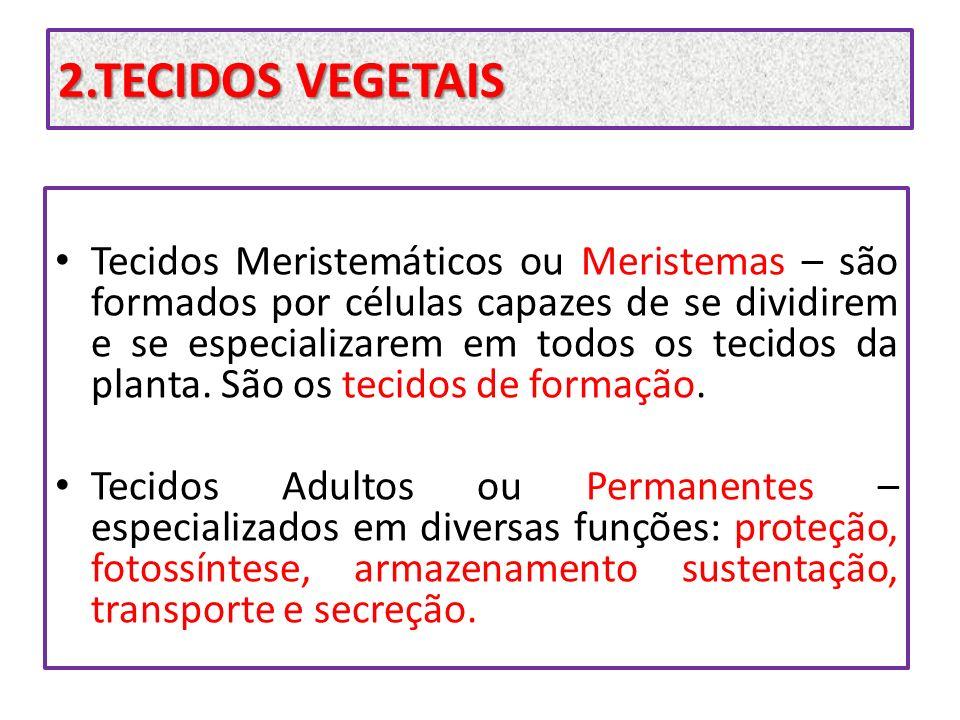 2.TECIDOS VEGETAIS