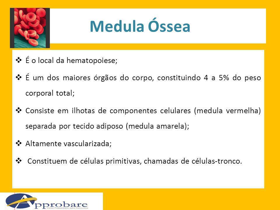 Medula Óssea É o local da hematopoiese;