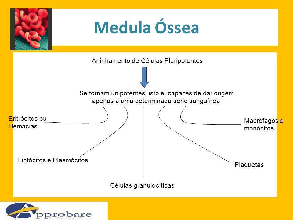 Medula Óssea Aninhamento de Células Pluripotentes