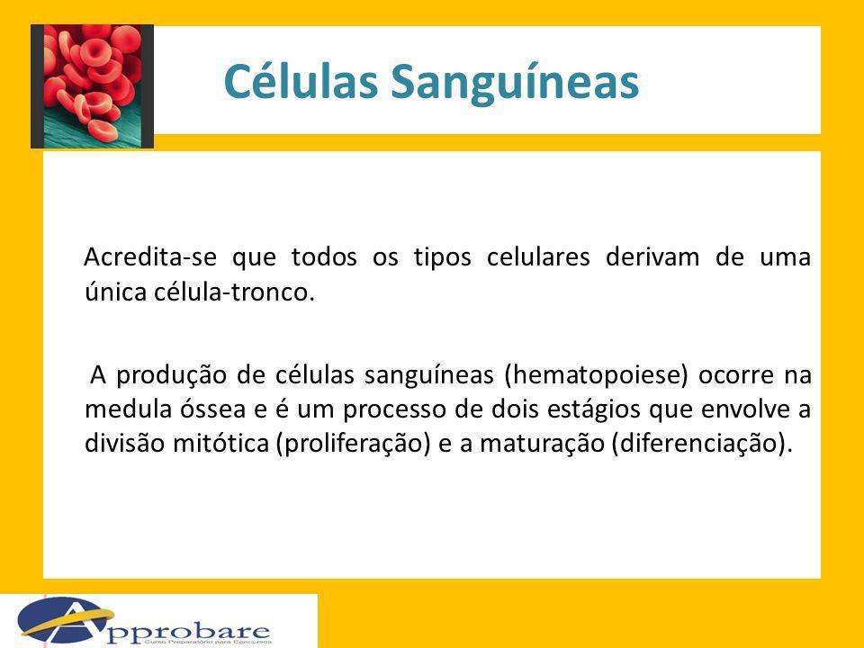 Células Sanguíneas Acredita-se que todos os tipos celulares derivam de uma única célula-tronco.