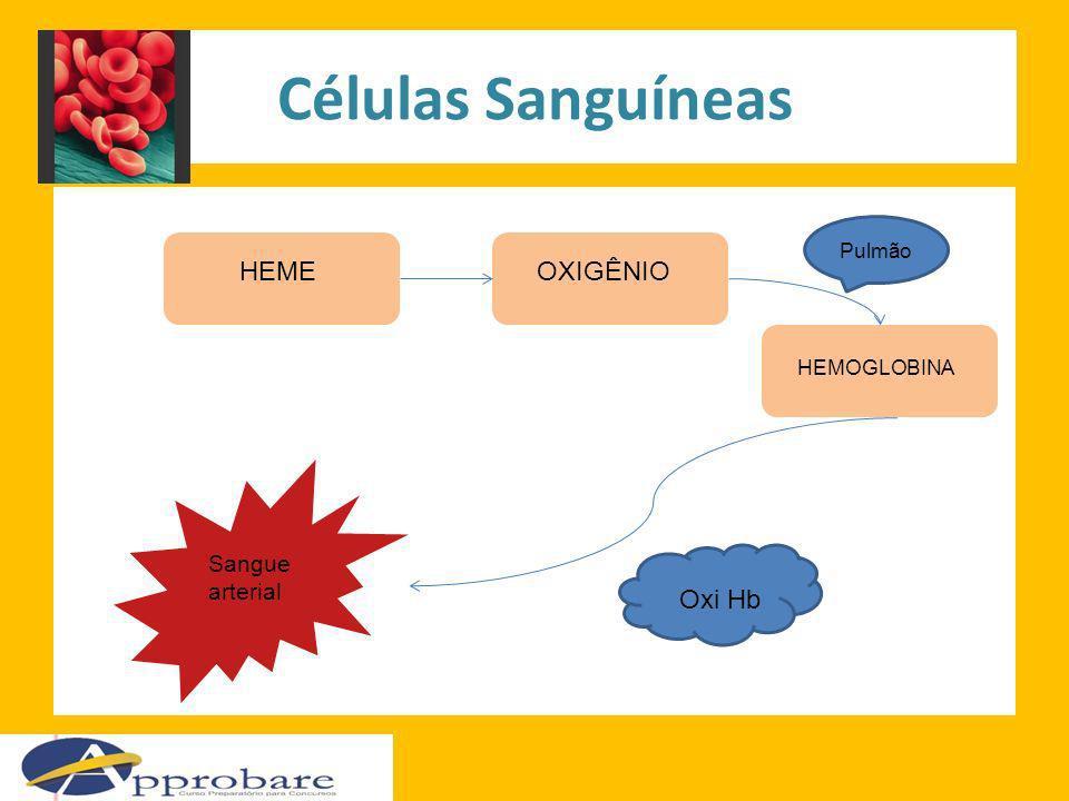 Células Sanguíneas HEME OXIGÊNIO Oxi Hb Sangue arterial Pulmão