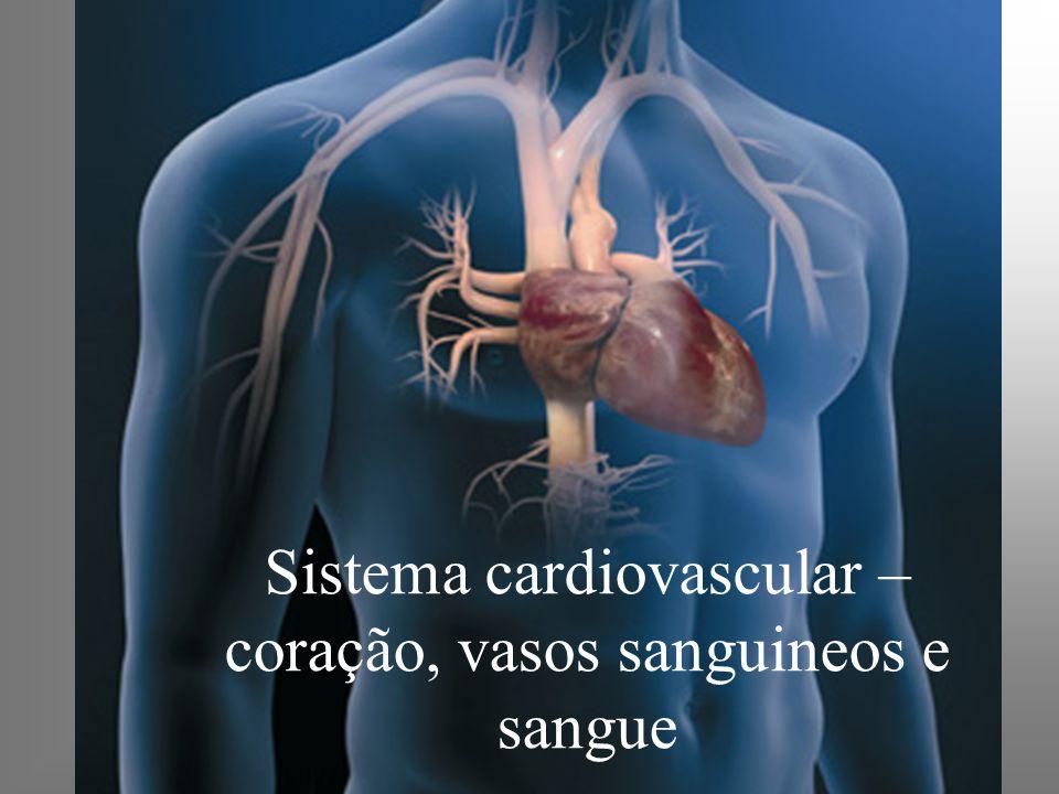 Sistema cardiovascular – coração, vasos sanguineos e sangue