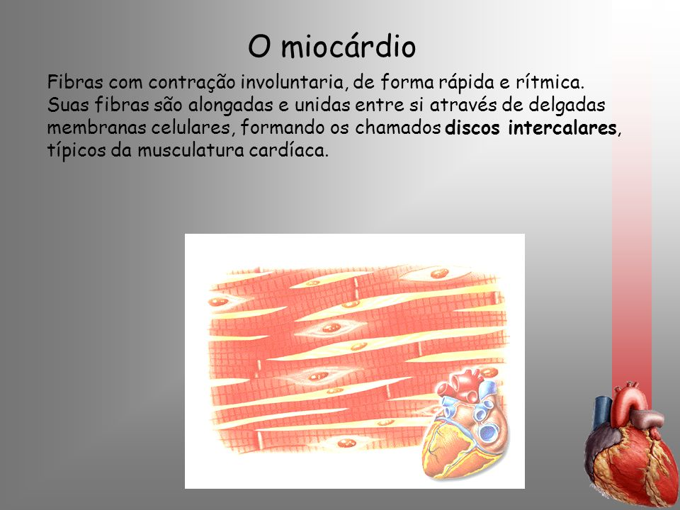 O miocárdio