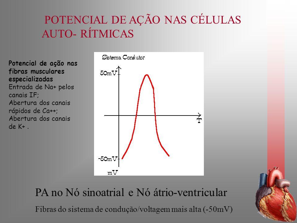 POTENCIAL DE AÇÃO NAS CÉLULAS AUTO- RÍTMICAS