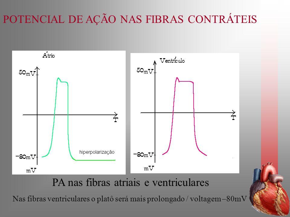 PA nas fibras atriais e ventriculares