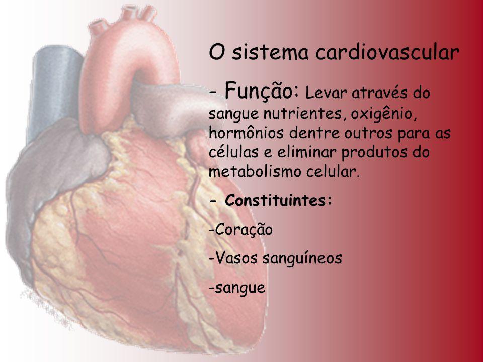 O sistema cardiovascular