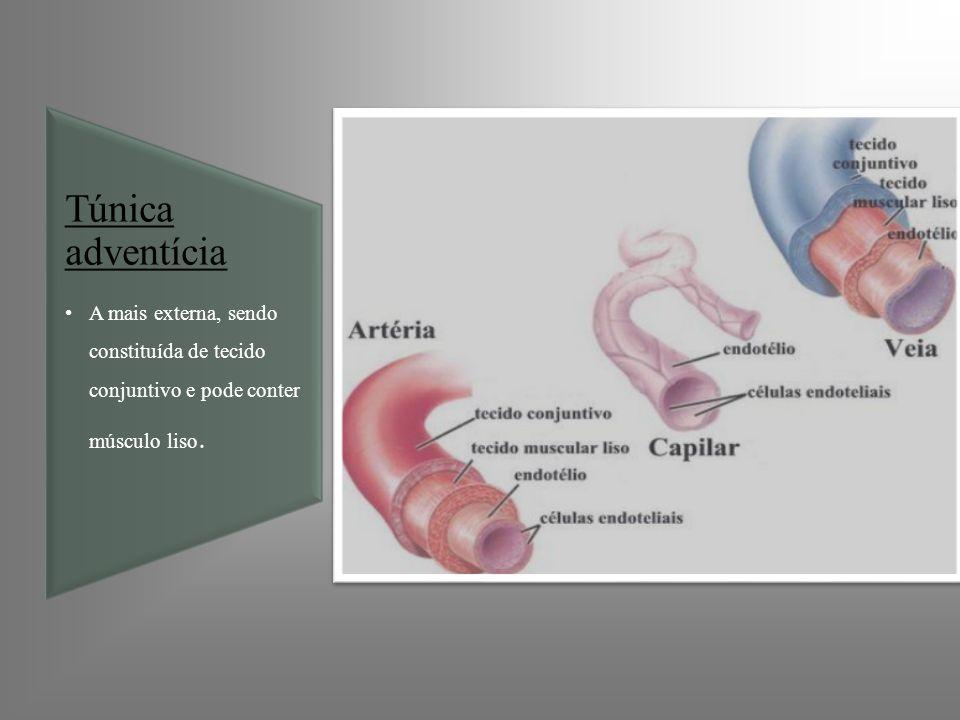 Túnica adventíciaA mais externa, sendo constituída de tecido conjuntivo e pode conter músculo liso.