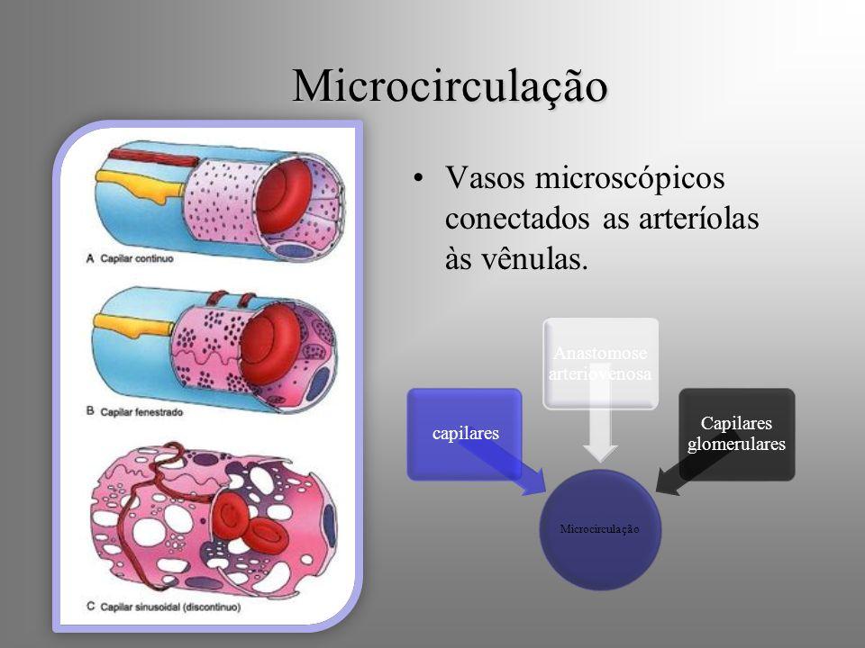Microcirculação Vasos microscópicos conectados as arteríolas às vênulas. Microcirculação. capilares.