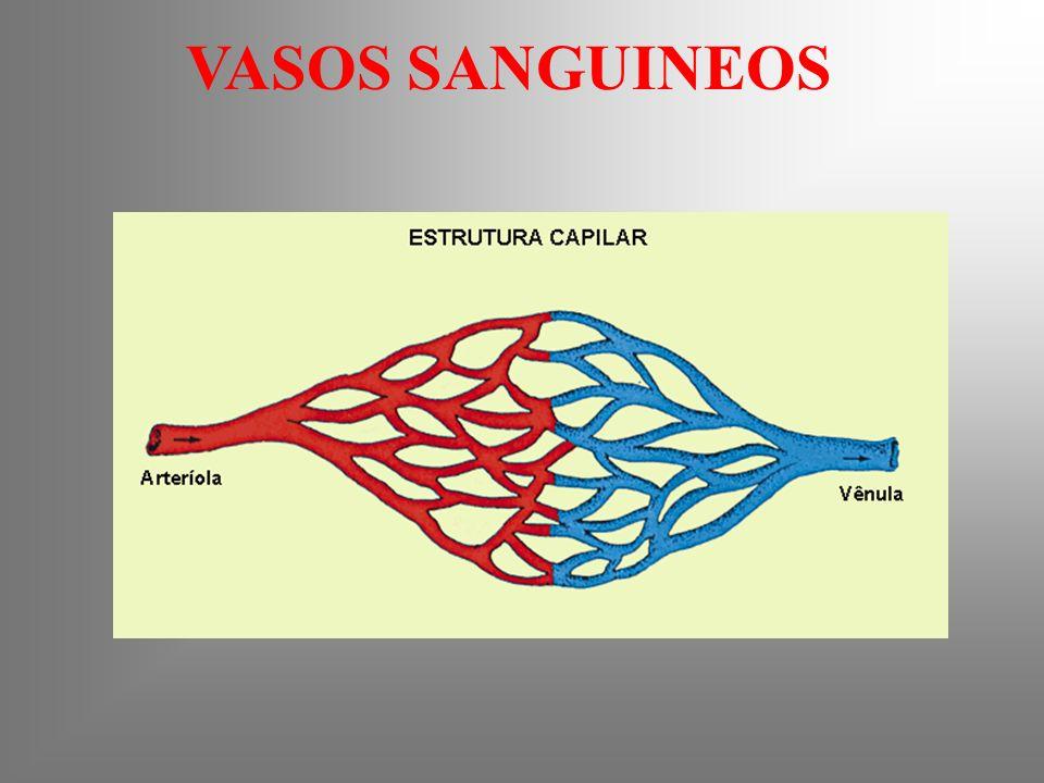 VASOS SANGUINEOS