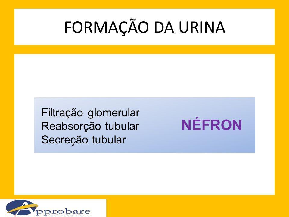FORMAÇÃO DA URINA NÉFRON Filtração glomerular Reabsorção tubular