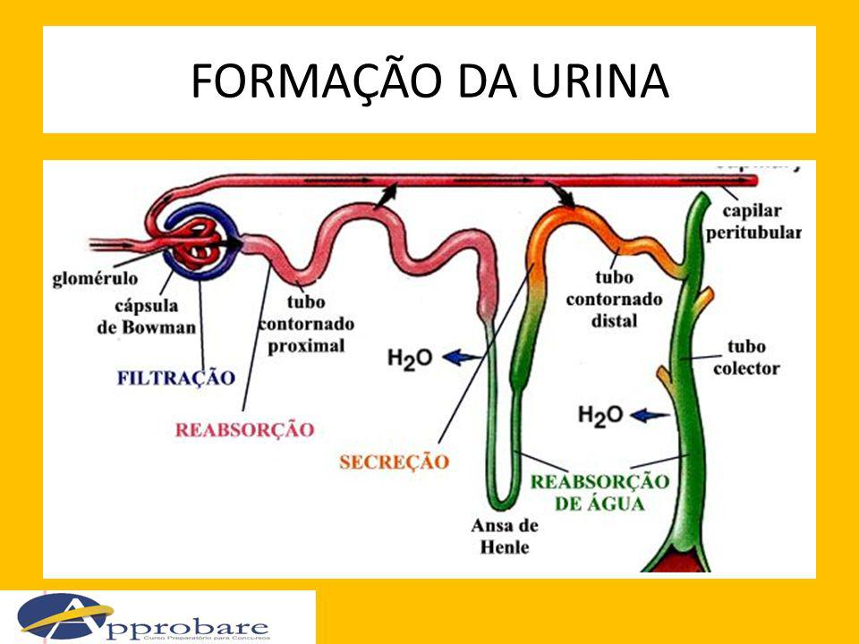 FORMAÇÃO DA URINA