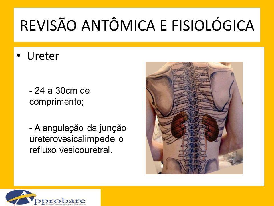 REVISÃO ANTÔMICA E FISIOLÓGICA