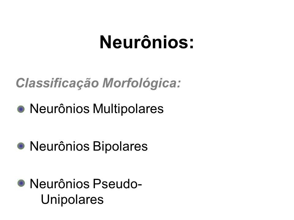 Neurônios: Classificação Morfológica: Neurônios Multipolares