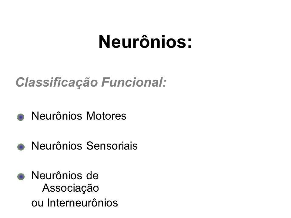 Neurônios: Classificação Funcional: Neurônios Motores