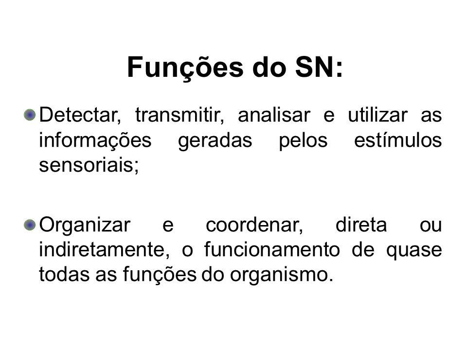 Funções do SN:Detectar, transmitir, analisar e utilizar as informações geradas pelos estímulos sensoriais;