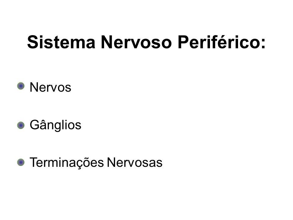 Sistema Nervoso Periférico:
