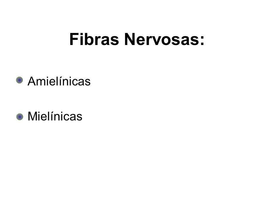 Fibras Nervosas: Amielínicas Mielínicas