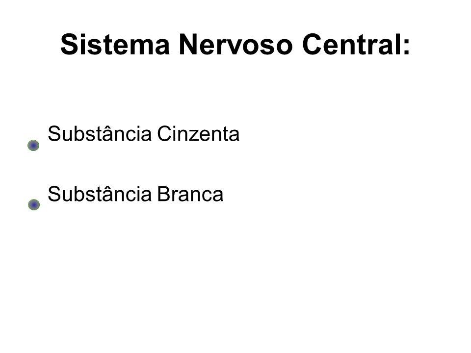 Sistema Nervoso Central: