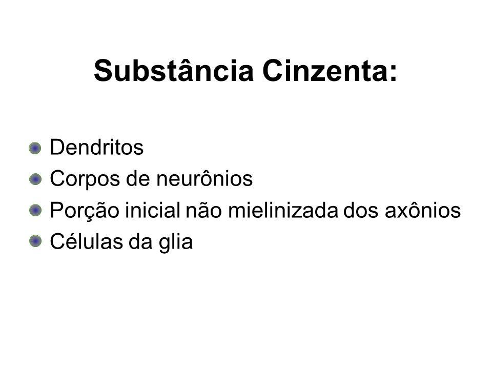 Substância Cinzenta: Dendritos Corpos de neurônios