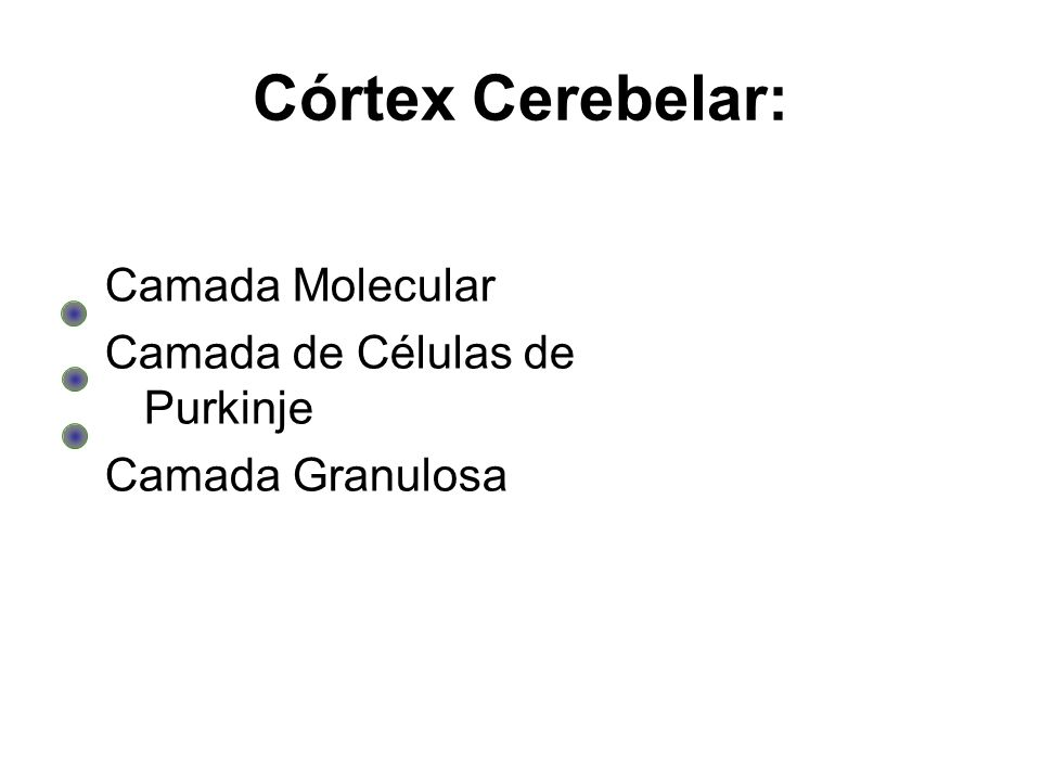 Córtex Cerebelar: Camada Molecular Camada de Células de Purkinje