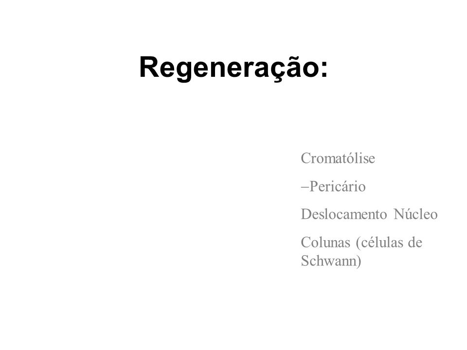 Regeneração: Cromatólise Pericário Deslocamento Núcleo