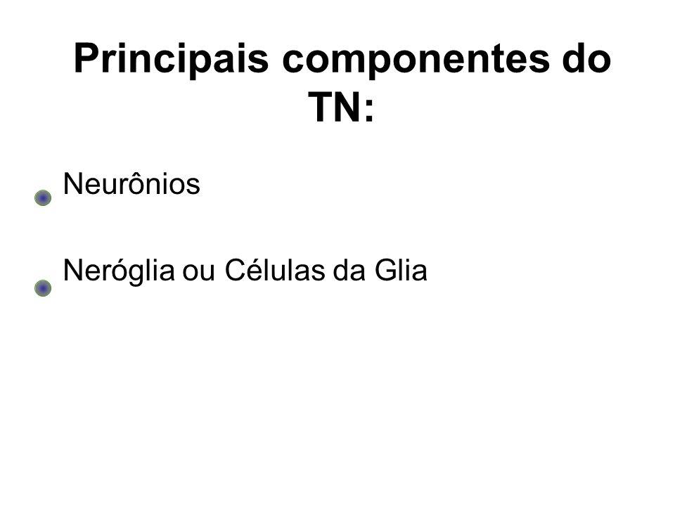 Principais componentes do TN:
