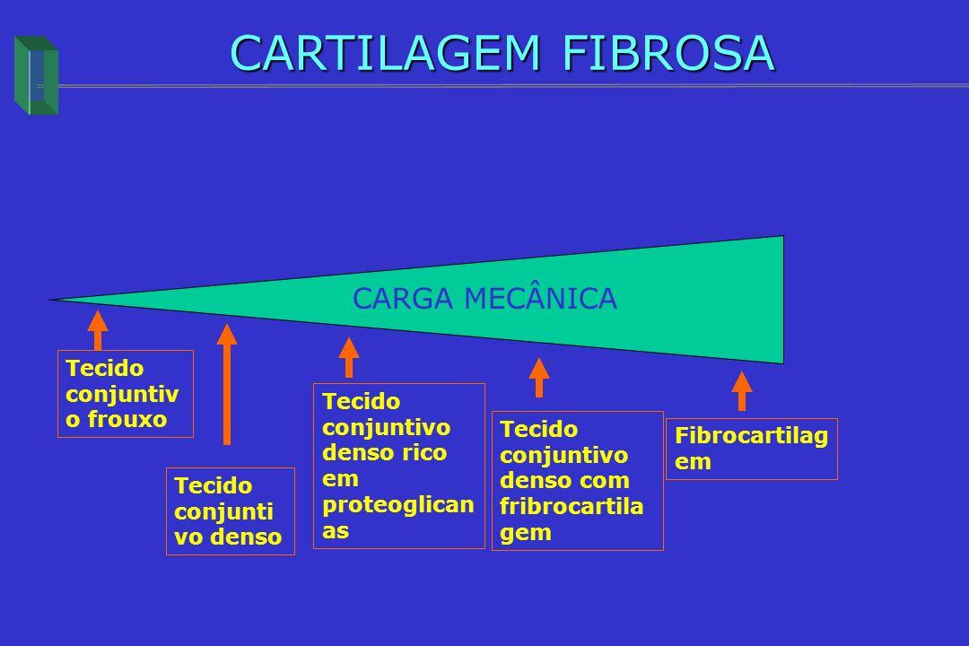 CARTILAGEM FIBROSA CARGA MECÂNICA Tecido conjuntivo frouxo