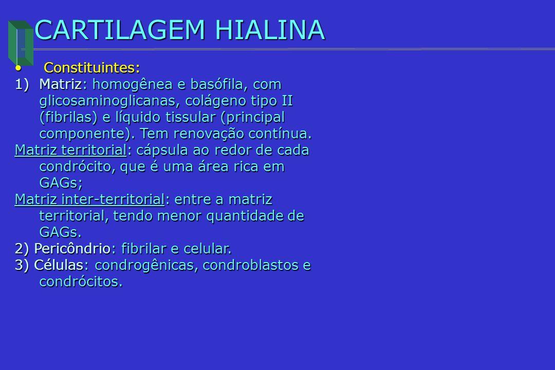 CARTILAGEM HIALINA Constituintes: