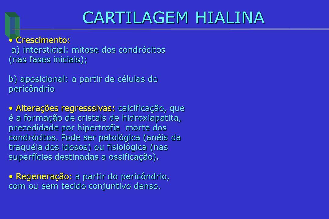 CARTILAGEM HIALINA Crescimento: