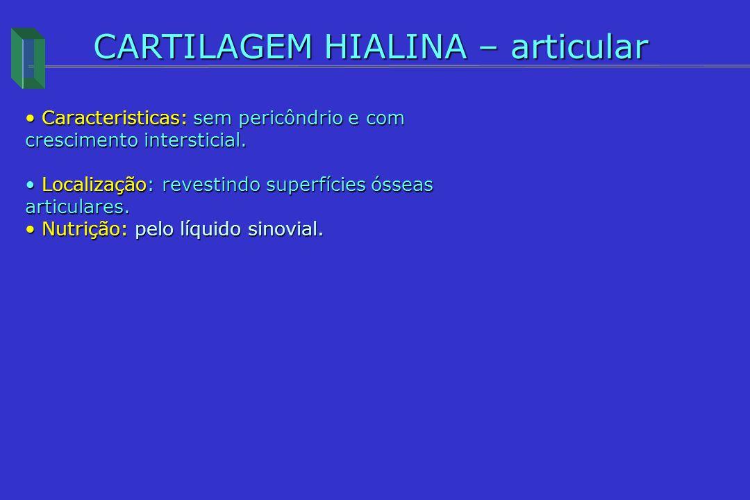CARTILAGEM HIALINA – articular