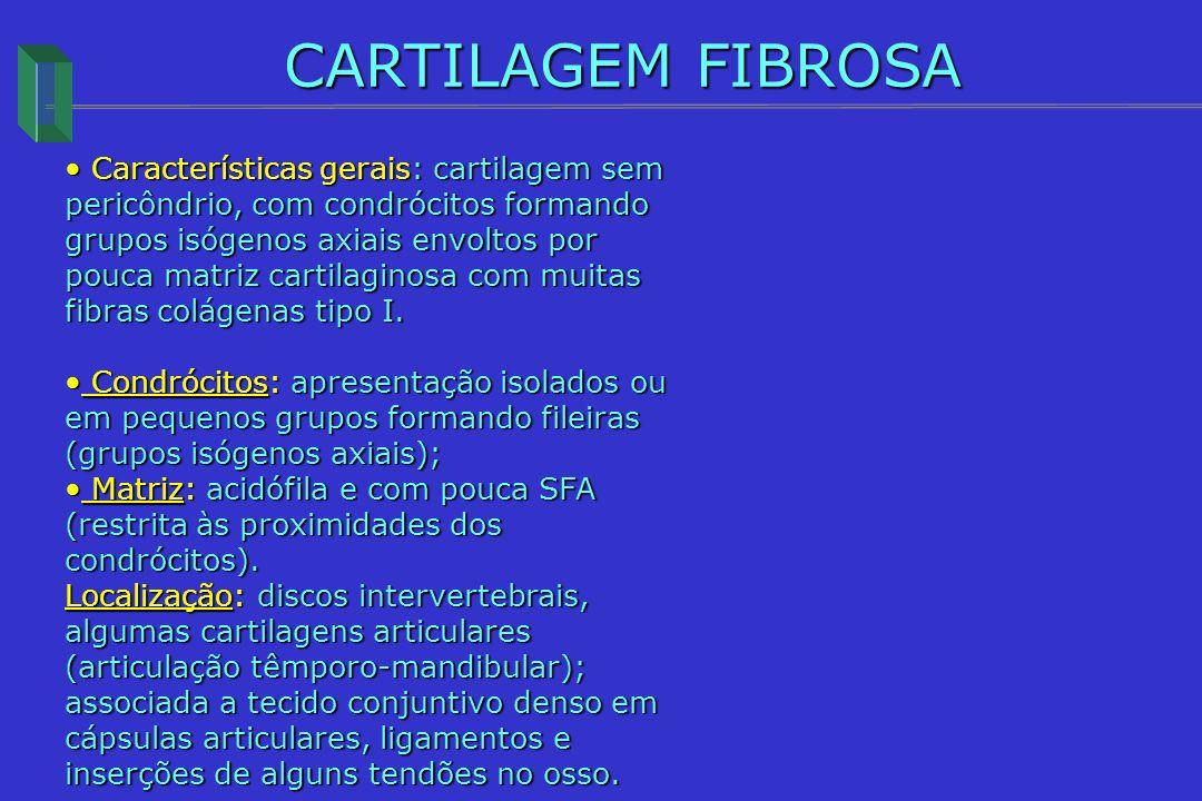 CARTILAGEM FIBROSA