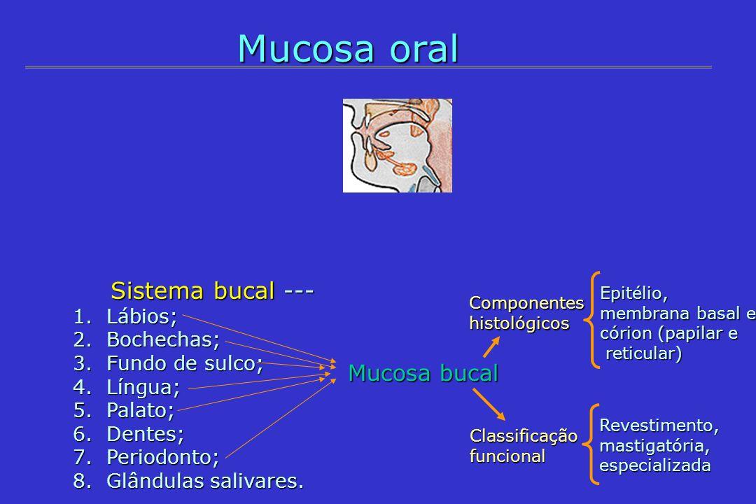 Mucosa oral Mucosa bucal Sistema bucal --- Lábios; Bochechas;