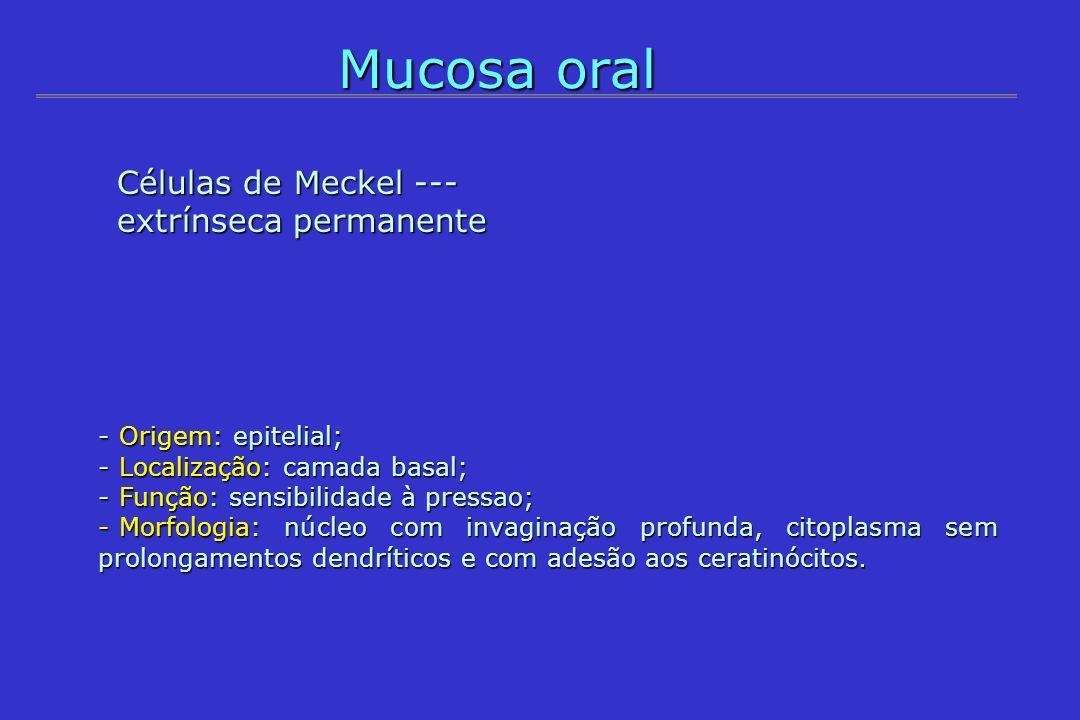 Mucosa oral Células de Meckel --- extrínseca permanente