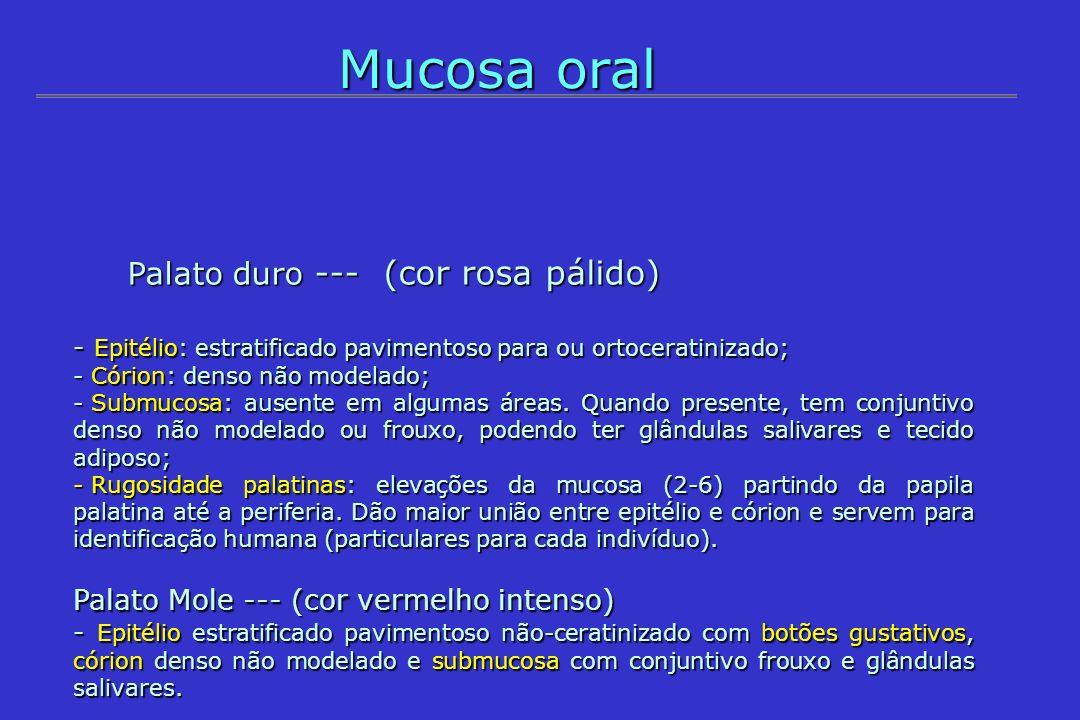 Mucosa oral Palato duro --- (cor rosa pálido)