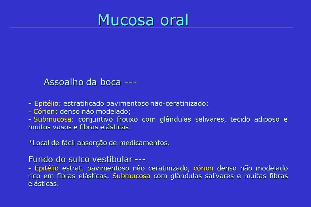 Mucosa oral Assoalho da boca --- Fundo do sulco vestibular ---