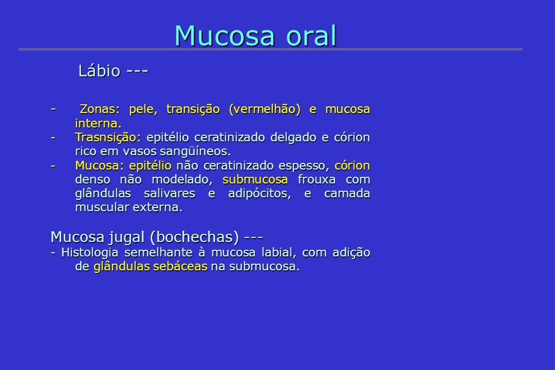 Mucosa oral Lábio --- Mucosa jugal (bochechas) ---